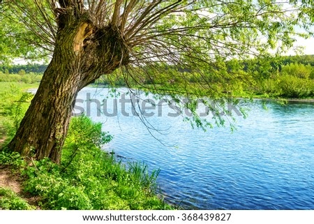 Big old tree on the river bank. Summer day with bright blue sky - stock photo