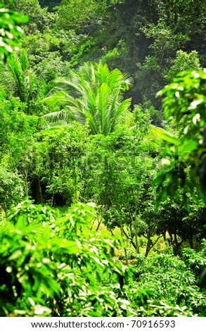 Big palm tree in the wild rainforest - stock photo