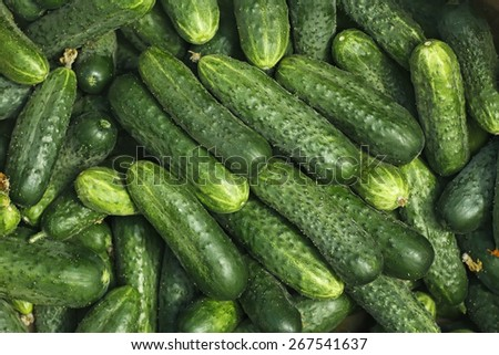 Big pile of fresh green cucumbers as a texture - stock photo