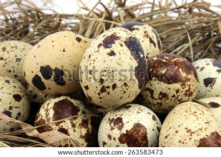Big pile of quail eggs on the background of hay - stock photo