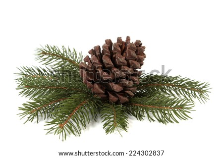 Big pine cone on the white background - stock photo