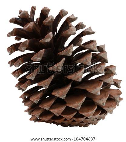 Big Pinecone Isolated - stock photo