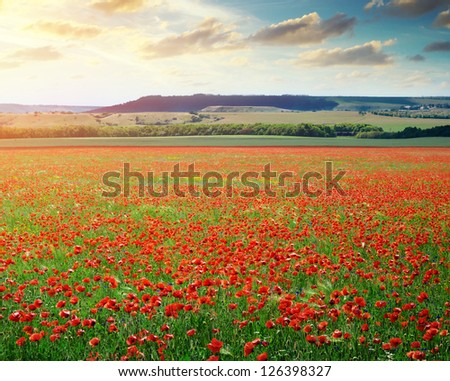 Big poppy meadow. Nature composition. - stock photo