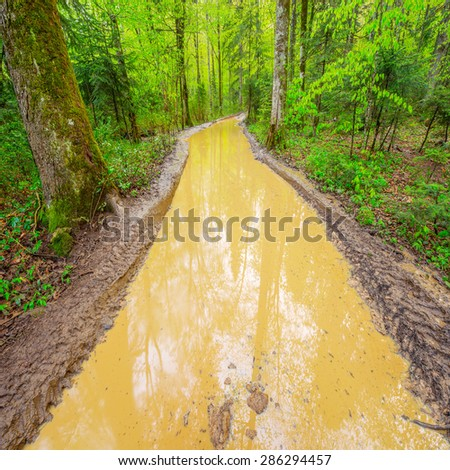 Big puddle on the deep forest road. - stock photo