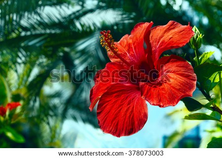 big red hibiscus flower on the sky background - stock photo