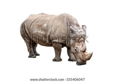 Big rhino standing, isolated on white background - stock photo