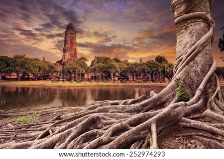 big root of banyan tree land scape of ancient and old pagoda in history temple of Ayuthaya world heritage sites of unesco central of thailand important destination of tourist  - stock photo