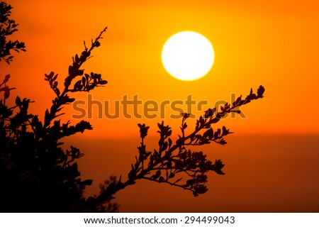 Big round setting sun in the African bushveld - stock photo