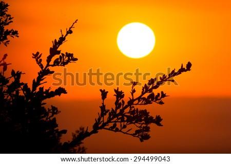 Big round setting sun in the African bushveld - stock photo