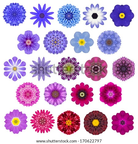 Big Selection of Various Colorful  Kaleidoscopic Mandala Flowers Isolated on White. Big Collection of flowers in Concentric shape pattern. Rose, Daisy, Primrose Flowers in Red, Orange, Purple colors. - stock photo