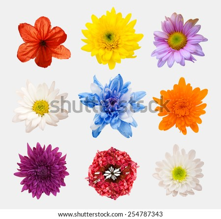 Big Selection of Various Flowers Isolated on White Background. Red, Pink, Yellow, blue Colors including rose, dahlia, marigold, zinnia, straw flower, daisy, primrose and other wildflowers - stock photo