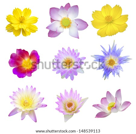 Big Selection of Various Flowers Isolated on White Background. Red, Pink, Yellow, White, Blue, Yellow Colors. - stock photo