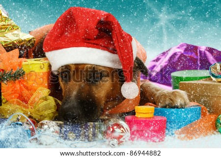 Big snowbound dog is waiting for christmas - stock photo