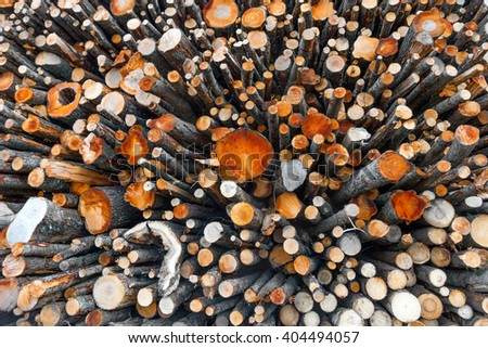 big stack of logs of trees in lumberyard - stock photo