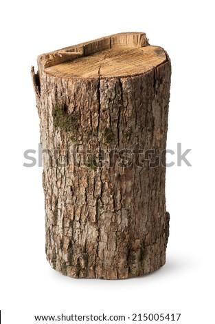 Big stump isolated on a white background - stock photo