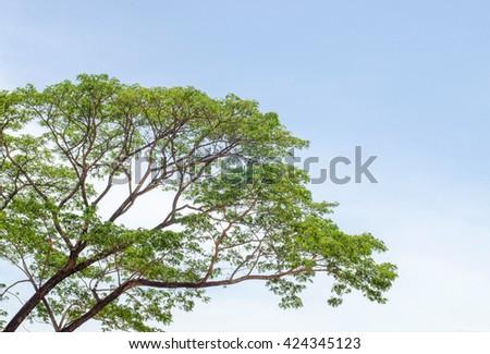 Big tree and green leaf - stock photo