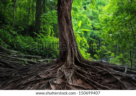 Big tree in forest. Green life background - stock photo