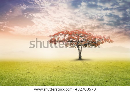 Big tree on meadow. Vintage Art Rural Grass Scenic Time Orange Yellow Eco Sun Plant Dawn Travel View Cloud Village Peace Calm Card Banner Bright Sunlight Red Heaven Paradise Earthly Life Valley. - stock photo