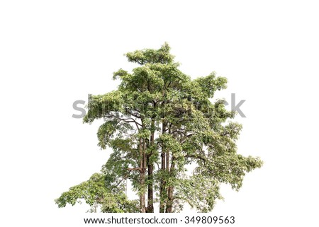 Big tree on white background - stock photo