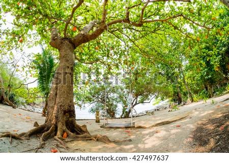 Big tree with fisheye lens - stock photo