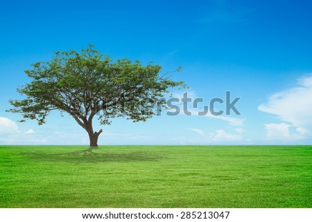 big tree with green field and blue sky - stock photo