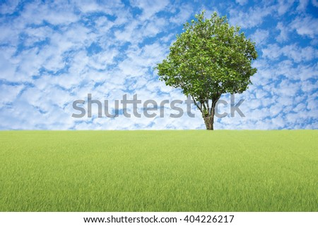 Big tree with meadow green and blue sky background. - stock photo