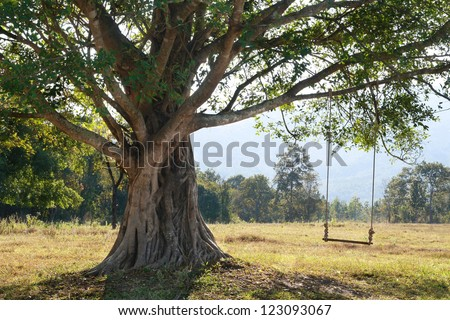 big tree with swing on green field, Chiang Mai, Thailand - stock photo