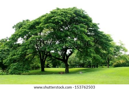 Big trees  - stock photo