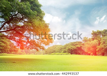 Big trees in the garden with burst light - stock photo