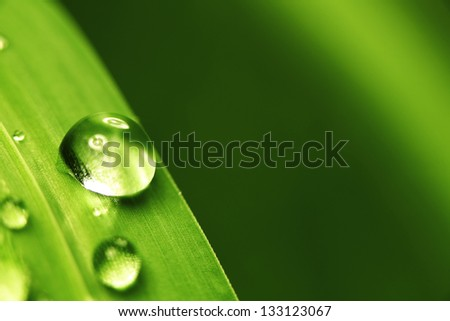 big water drop on grass blade - stock photo