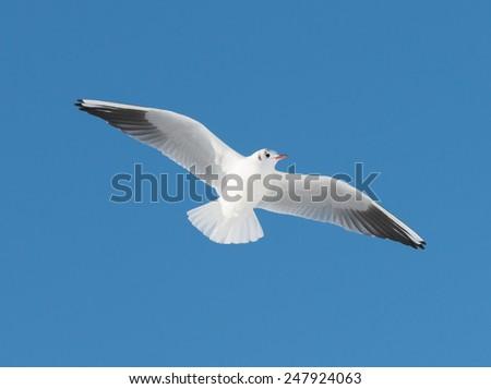 big white bird fly on sky - stock photo