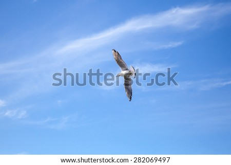Big white seagull on blue cloudy sky background - stock photo