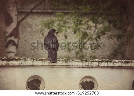 Big wild black raven resting in the park, vintage background. - stock photo