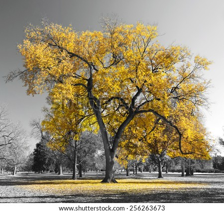 Big yellow tree in a black and white landscape - stock photo
