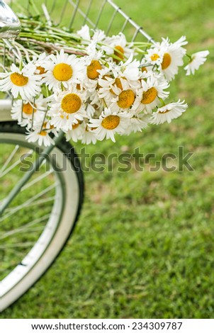 Bike basket full of daisy flowers with room for copy space. - stock photo