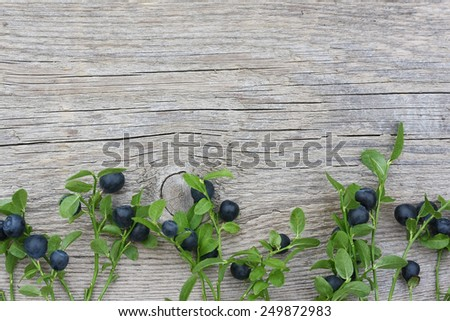 Bilberry branches with berries on old wooden background - stock photo