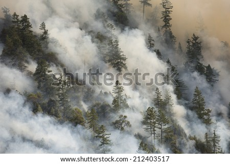 Billowing smoke from a forest fire (Lodge Fire, California, August 2014). - stock photo