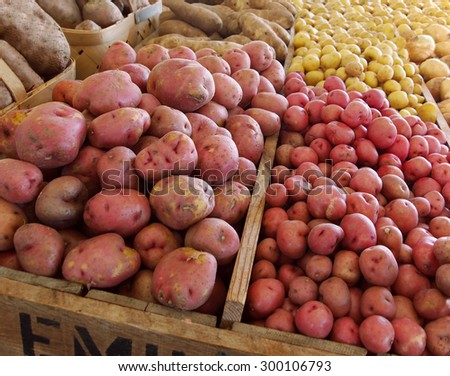 Bins and baskets of potatoes organized by variety at a local farm after harvesting. - stock photo