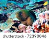 Biodiversity of Polynesia - stock photo
