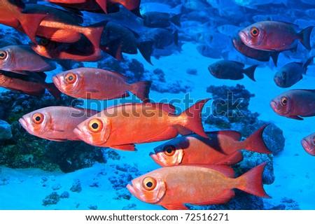 Biodiversity of Rangiroa, Polynesia. - stock photo