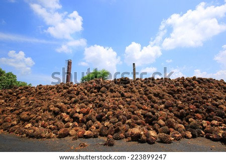 biogas plant with beautiful blue sky and white cloud  , Palm oil, a well-balanced healthy edible oil is now an important energy source for mankind. It comes from the fruit itself (reddish orange).  - stock photo