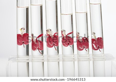 Biotechnology identical  flowers in test tubes (Dicentra spectabilis)- symbol of cloning  - stock photo