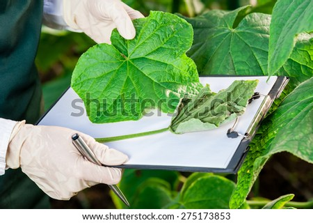 Biotechnology woman engineer with a clipboard and pen examining plant leaf for disease comparing to a healthy leaf. - stock photo