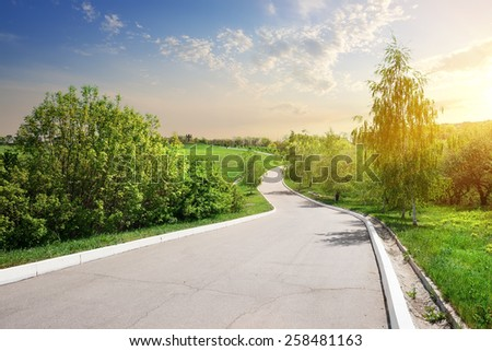 Birch and alley at the sunny sunrise - stock photo