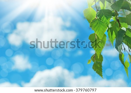 Birch branch with bright leaves against the sky - stock photo