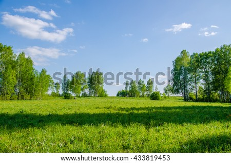Birch covered with green foliage . spring landscape. forest on a hot summer day . trees covered with dense foliage . Green color prevails . beautiful landscape  - stock photo