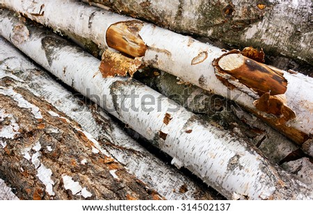 birch firewood - stock photo