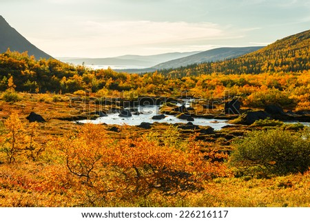 Birch trees in front of colorful autumn tundra and northern taiga forest in Malaya Belaya river valley in Hibiny mountains above the Arctic Circle, Russia - stock photo
