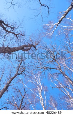 Birches and other trees - stock photo