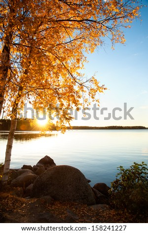 Birches at a lake in Sweden in autumn, back light situation with the sun and beautiful reflections on the water - stock photo